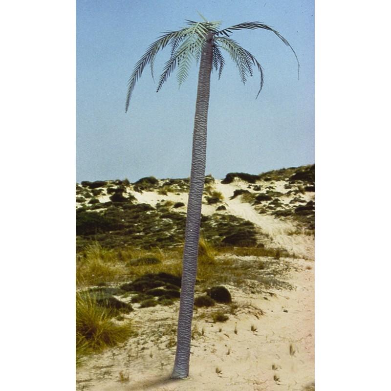 Palm tree (1/35)