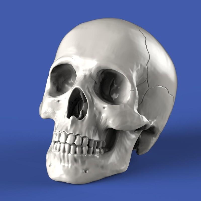Skulls (1/35 scale)